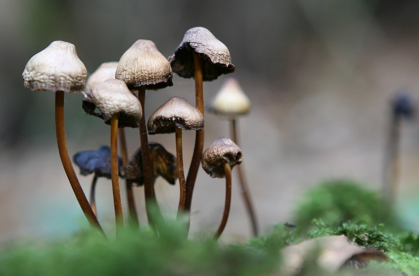 About Magic Mushrooms For Sale